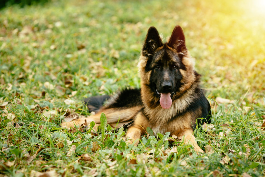 prostata ecografia cane